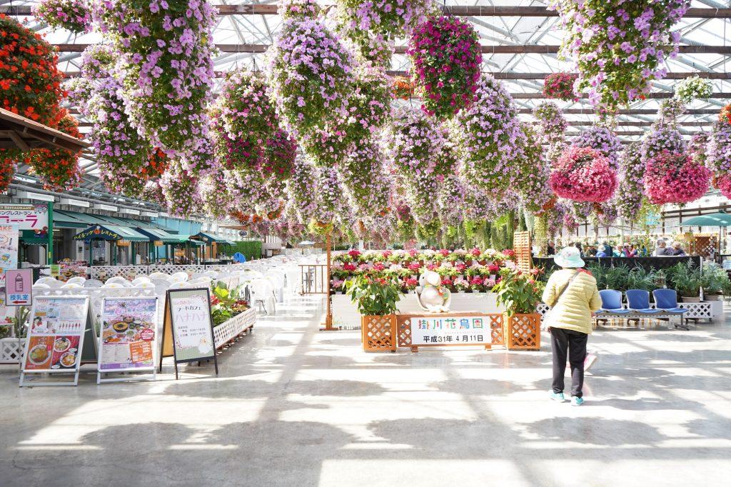 掛川花鳥園のお花