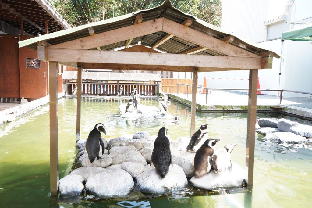日向ぼっこをするペンギン